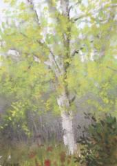 arbre-bouleau-2-